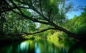 limb over water