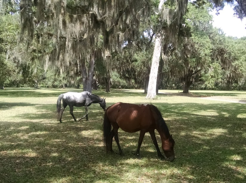 two wild horses cumberland