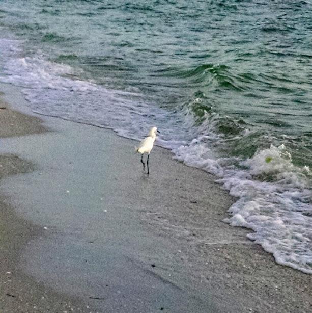 bird at Gulf