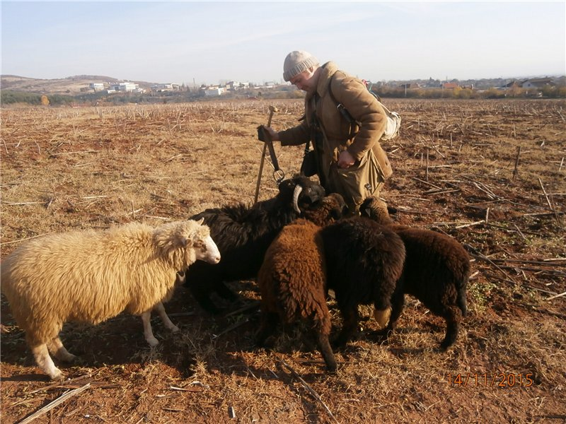 kind shepherd feeding