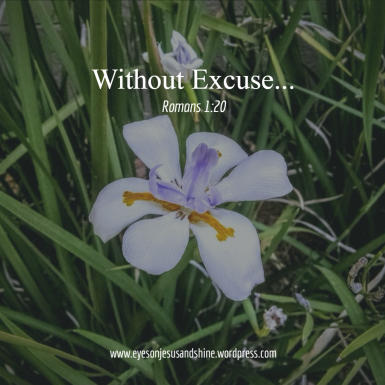 flower without excuse