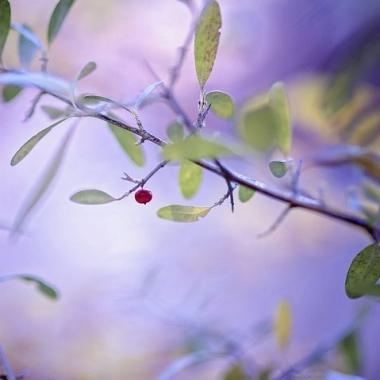 almostbarefruittreepic
