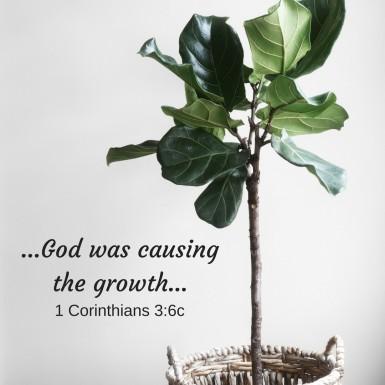 growth 1 Cor 3.6 MG